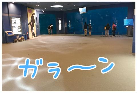 名古屋港水族館 ゆむい