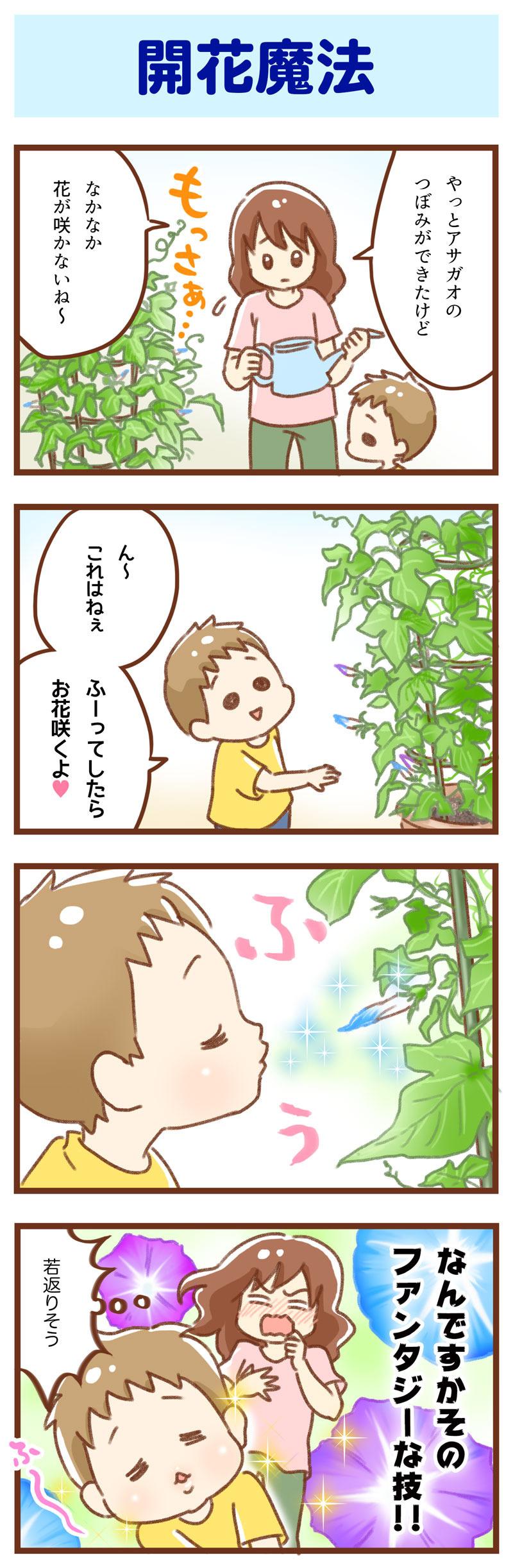 アサガオ 開花 ゆむい