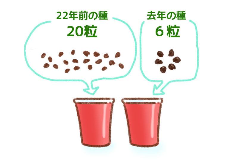 アサガオ栽培 ゆむい