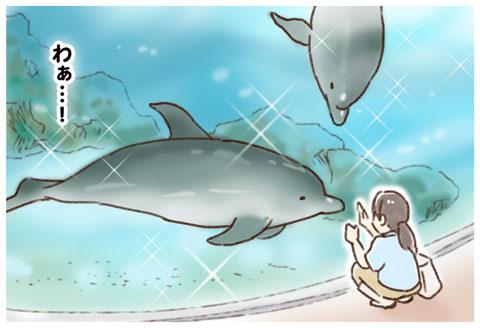 水族館 イルカ ゆむい