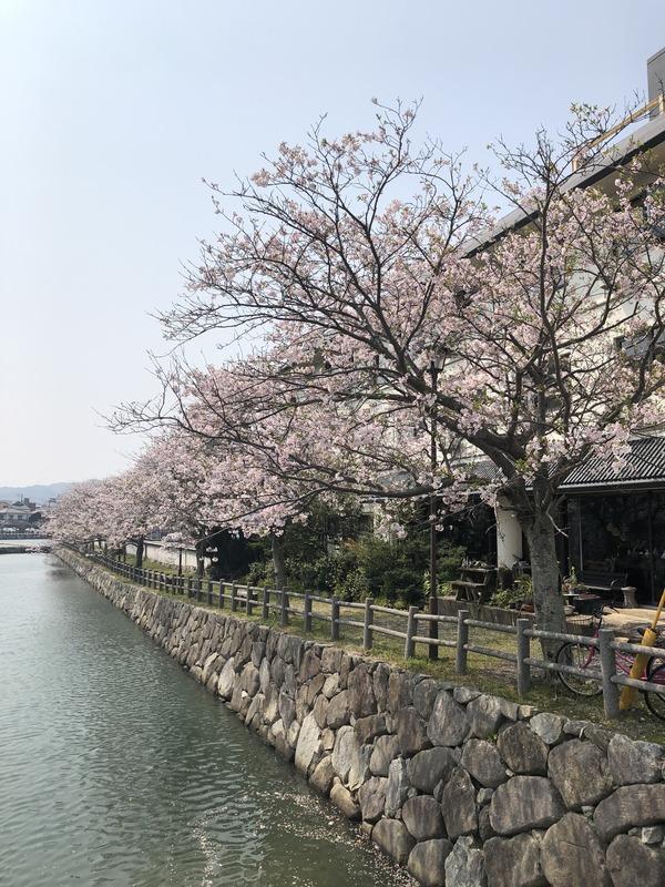 桜めぐり唐津2 (32)