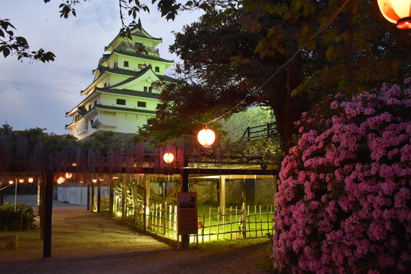 唐津城の夜の藤 (1)