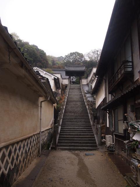 竹原桜2 (50)