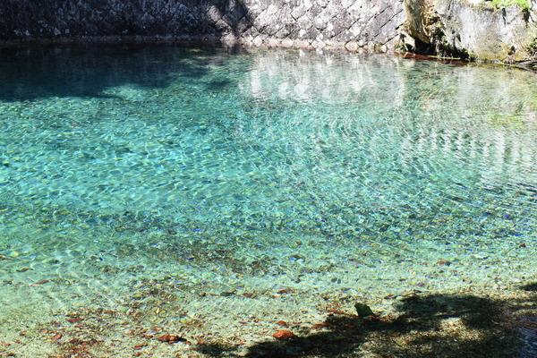 夏の弁天池 (2)