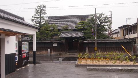 竹原桜2 (6)