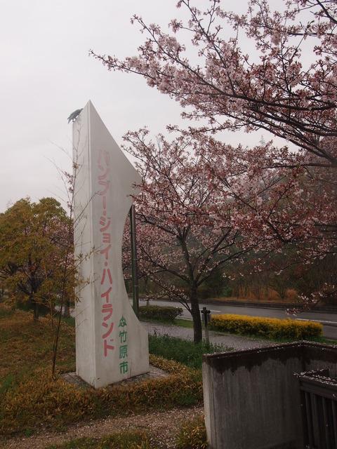 竹原桜1 (33)