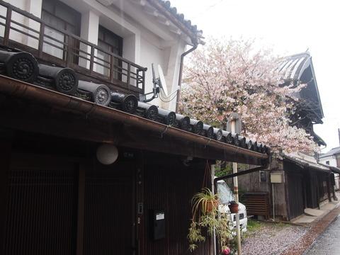 竹原桜2 (28)