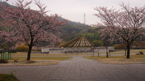 竹原桜1 (29)