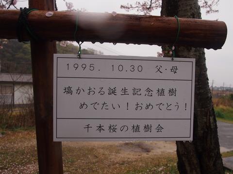 竹原桜1 (35)