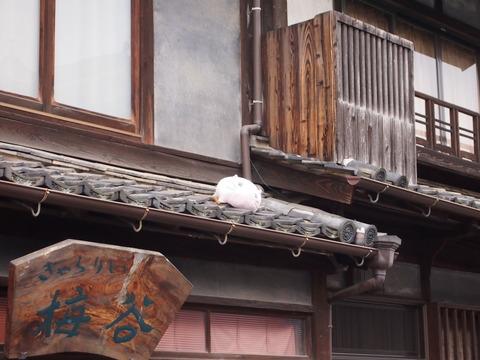 屋根の上のももねこ様