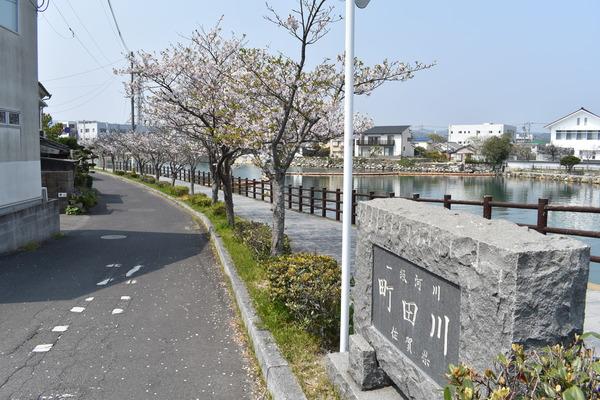 桜めぐり唐津2 (6)