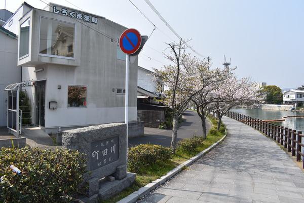 桜めぐり唐津2 (4)