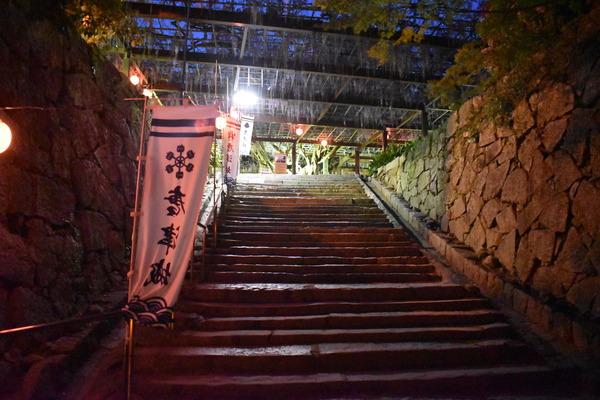 唐津城の夜の藤 (8)