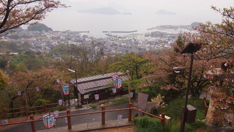 竹原桜1 (9)