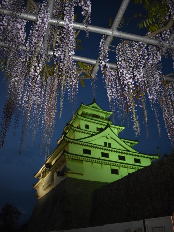 唐津城の夜の藤 (7)