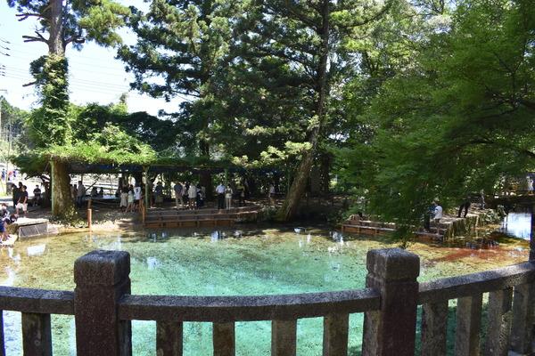 夏の弁天池 (8)