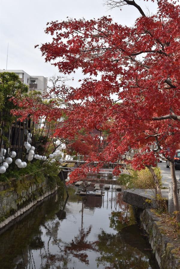 佐嘉神社の紅葉とゾンサガスタンプラリー (10)