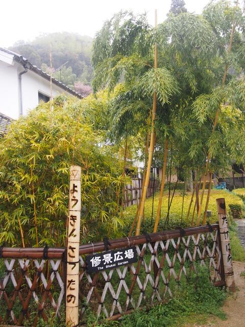 竹原桜2 (51)