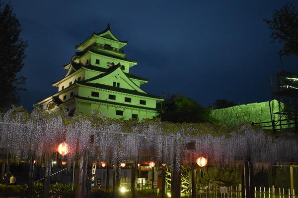 唐津城の夜の藤 (5)