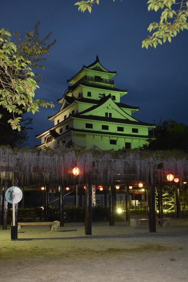 唐津城の夜の藤 (3)