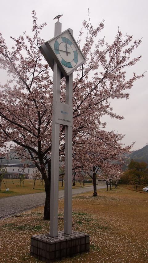 竹原桜1 (32)