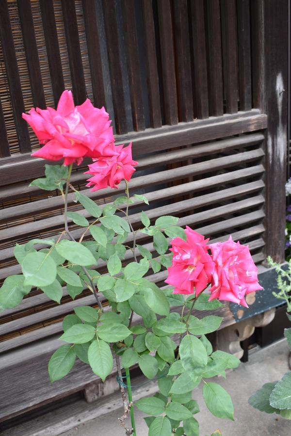 半年ぶりの竹原聖地巡礼 (49)
