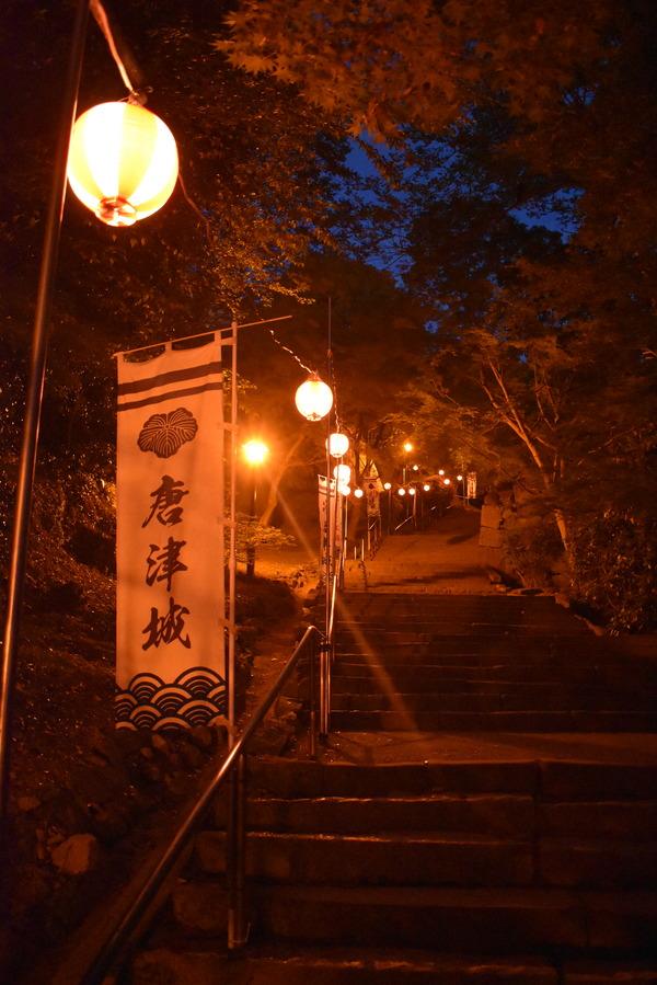 唐津城の夜の藤 (9)