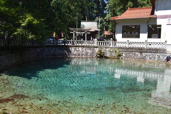 夏の弁天池 (1)