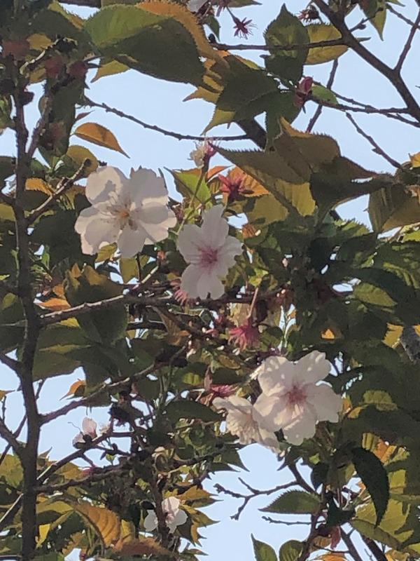 桜めぐり唐津2 (27)