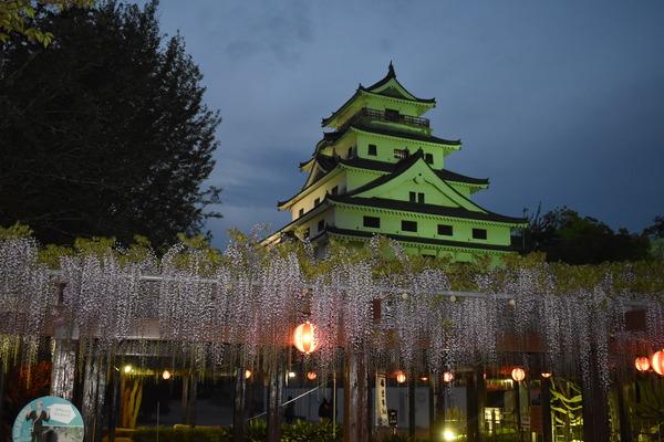 唐津城の夜の藤 (2)