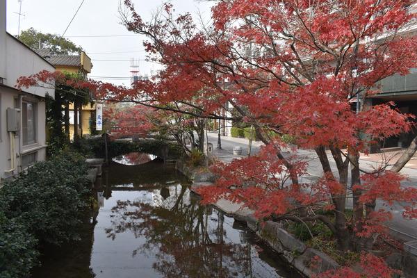 佐嘉神社の紅葉とゾンサガスタンプラリー (9)