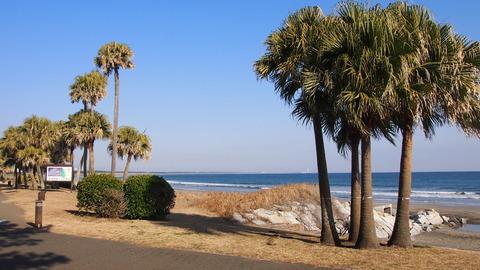 青島海岸(1)