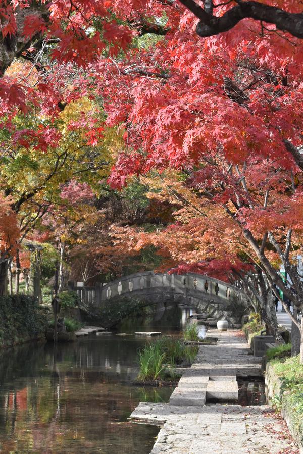 佐嘉神社の紅葉とゾンサガスタンプラリー (4)