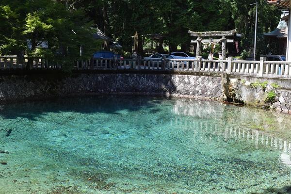 夏の弁天池 (3)