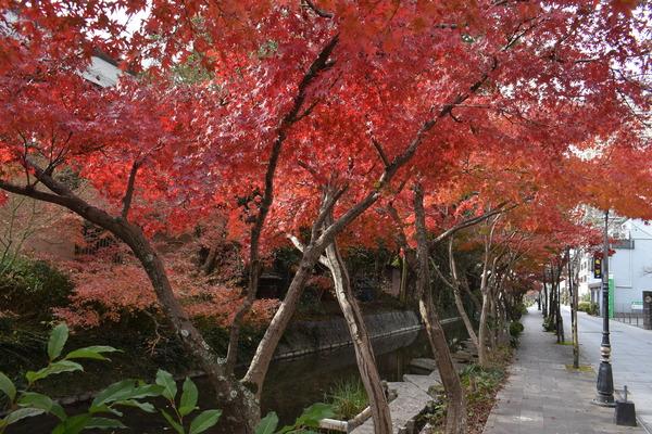 佐嘉神社の紅葉とゾンサガスタンプラリー (7)
