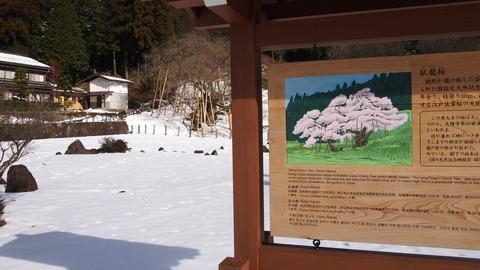 24臥龍桜の看板