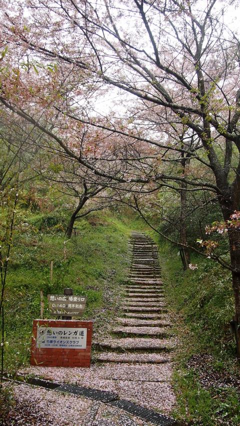 竹原桜1 (25)