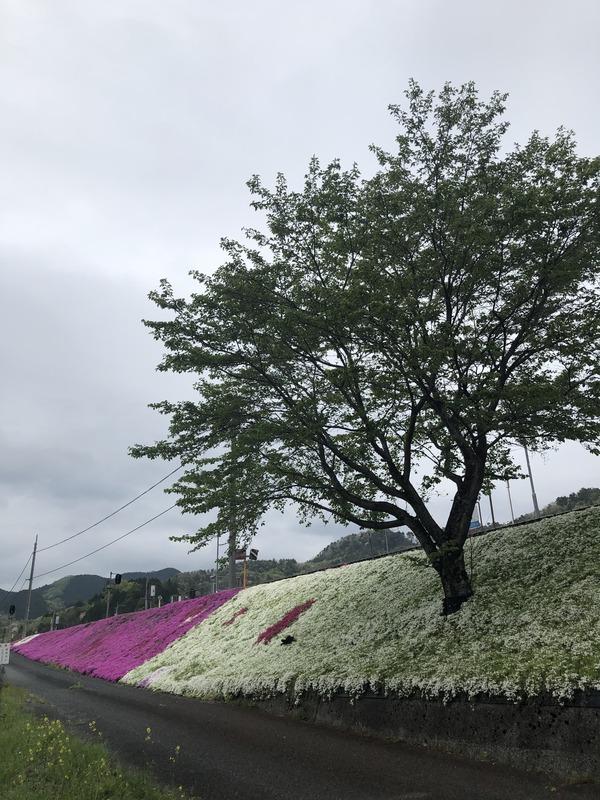 宮本えりおと恋山形駅 (39)