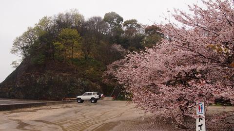 竹原桜1 (38)