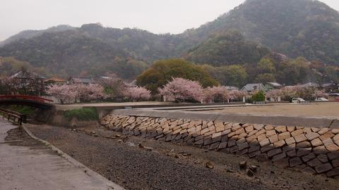 竹原桜1 (49)