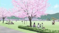 竹原桜参考画像 (12)