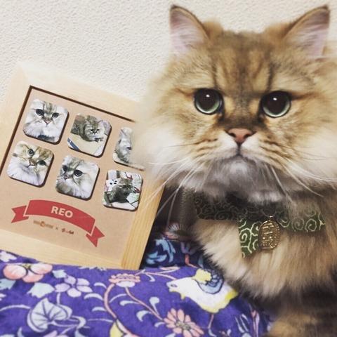 猫 かわいい