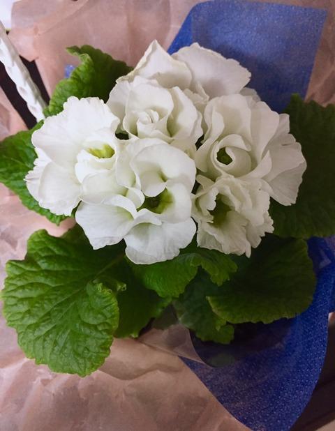 IMG_卒園式のお花