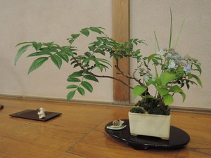160611-盆栽1