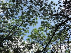 150501-木漏れ日4