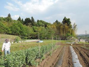 150512-マリポ農園5
