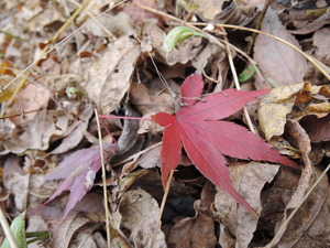 141201-紅葉
