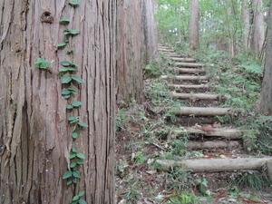 141011-久留里城林間歩道