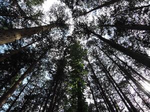 150501-木漏れ日3