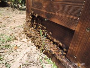181201-ミツバチ